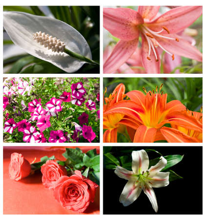 collection different beautiful flowers rose and lily photo
