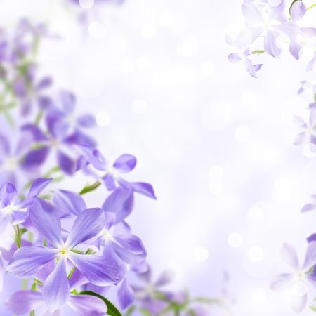 bouquet fleur: bleus sur fond violet la floraison des fleurs sauvages