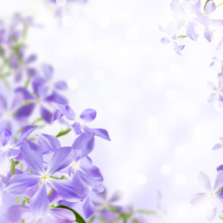 april flowers: wild flowers blue blooming on violet background