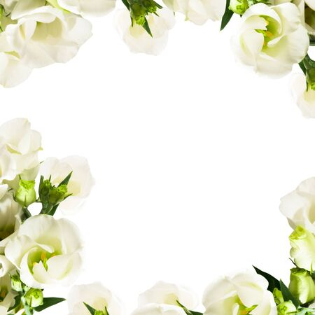 rose frame: White flowers rose frame isolated over white