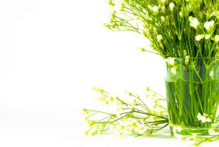 vitreous: bunch of flowers in glass vitreous vase isolated over white