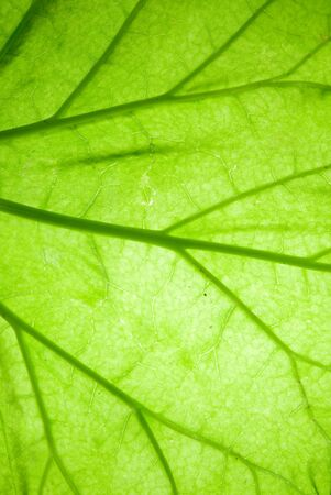 background from green leaf closeup photo