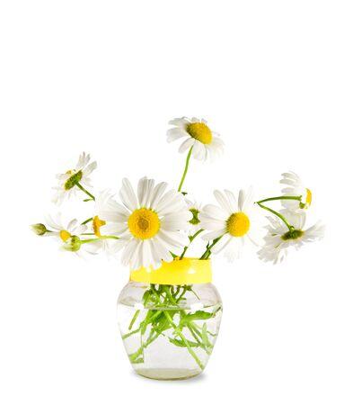 daisywheel: Flowers daisywheel on glassy vase isolated over white