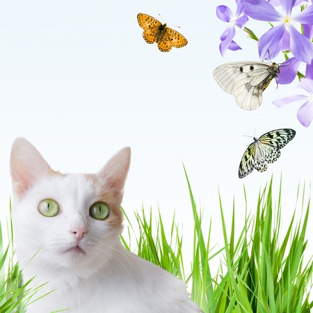 Cat white in grass looking on butterfly photo