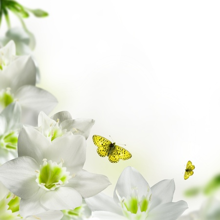 animal border: White flowers postcard with butterfly isolated over white