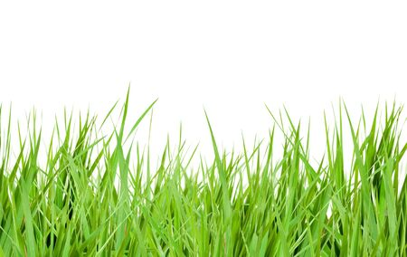 grass green isolated over white Stock Photo - 10049736