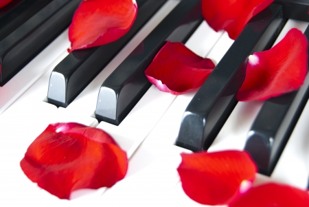 Piano with red petal rose photo