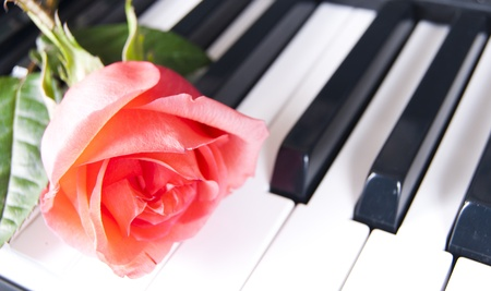 Flower one red rose on keyboard piano Stock Photo - 13107278