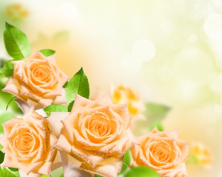 Flower yellow rose with green leafs blossom