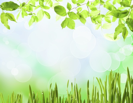 Background from meadow grass green on background blue sky photo
