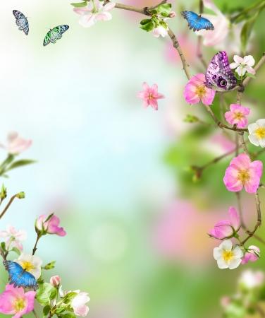 蝶と fllowers からの背景の自然