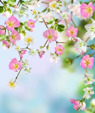 borde de flores: Flores de fondo Foto de archivo