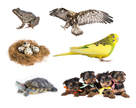 large turtle: The collection of animals in isolation on white  Stock Photo