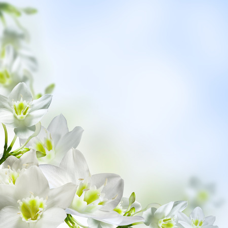 White flowers on a light blue background stock photo picture and stock photo white flowers on a light blue background mightylinksfo