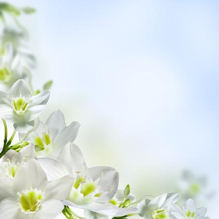 wedding border: White flowers on a light blue background  Stock Photo