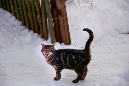 miaul: Nice mewing cat in december white snow