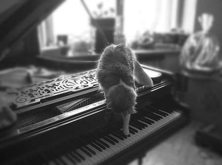 Cat learns to play piano in day photo
