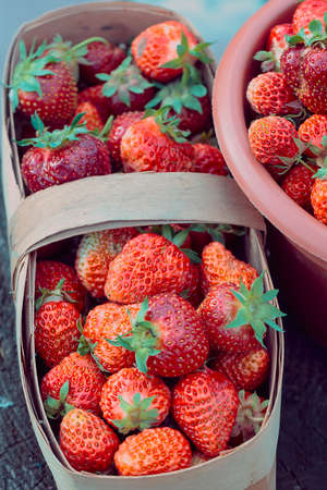 Great harvest of fresh red strawberries in basket photo