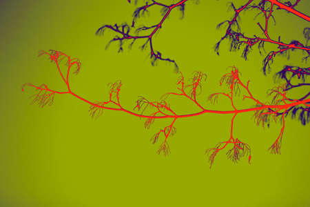 non urban scene: Colored branch of tree on green background with effect of gradient Stock Photo