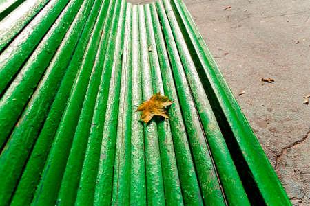 Autumn maple leaf on green wooden bench on sunny autumn day photo