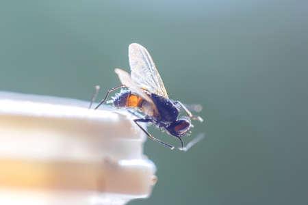 housefly: Housefly in sunlight at edge of plastic bottle