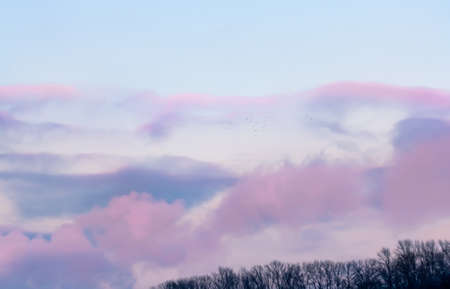 pink sunset: Soft pink sunset with clouds and flying birds Stock Photo