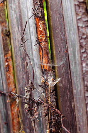 barbed wire fence: Colorful wooden planks of fence and fragment of barbed wire