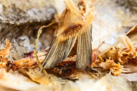purified: Nice tail is dried purified big fish