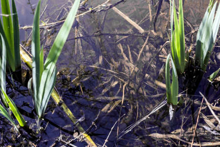 grass roots: Grass roots under water in sunlight weather Stock Photo