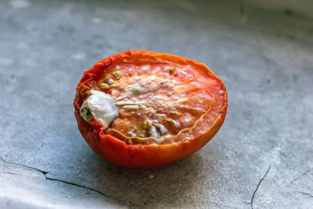 unhygienic: Half of ripe tomato with mold on grey backgruond Stock Photo