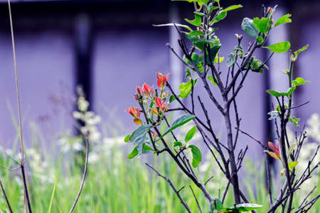 twigs: Nice twigs of bush with red and green leaves