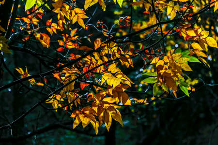beautiful woodland: Nice colorful autumn colours in trees on sunny day Stock Photo