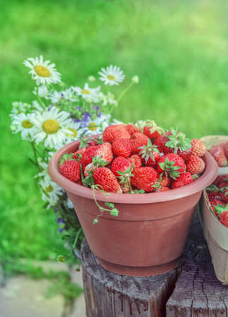 strawberrys: Fresh ripe summer strawberrys for health eating and party