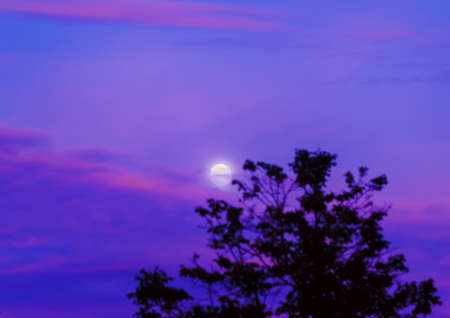 eventide: Tender moon in haze of purple sunset summer sky