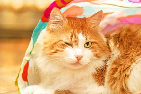 canny: Adult nice red cat in bag winks