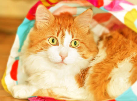 canny: Adult nice red cat in bag like surprise