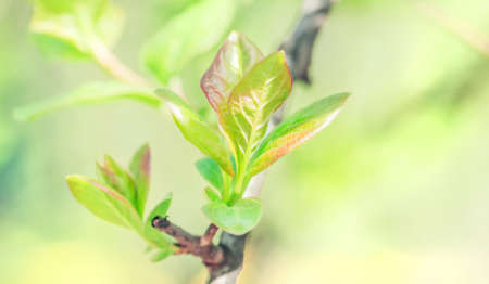 Young green spring leaves at sunny day Stock Photo