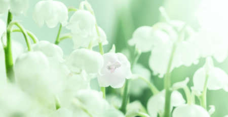 White delicate lily of the valley like symbol of purity and springtime