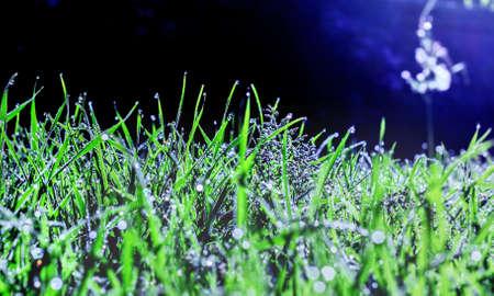Beauty brilliance dew on dark green morning grass Stock Photo