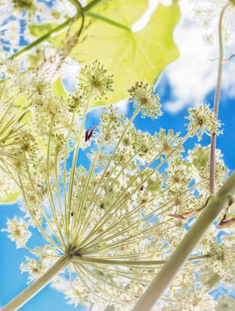 Pretty summer light fantasy with insects sex Stock Photo
