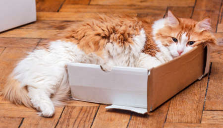 Too small cat box for adult red great kitty