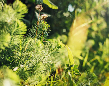 Tender green grass in sunny bright happy forest Stock Photo