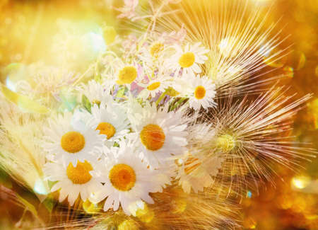 Nice bright bouquet with camomilles for good mood Stock Photo