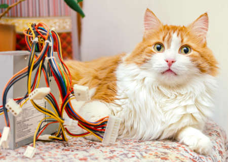 Pretty adult red cat and computer wires in bright home interior
