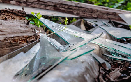 Beauty broken glass in old wooden and spring grass