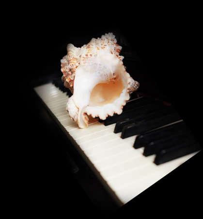 White seashell on piano keys bokeh on black background