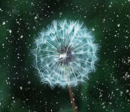 Big white dandelion in white speckle on dark green background