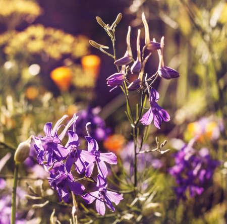 Great beauty lilla flowers in sunny garden