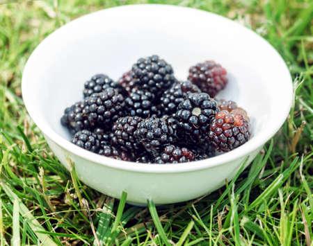 Ripe blackberry in white bowl on green grass