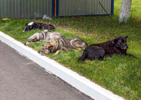 Four homeless dogs resting on grass at summer day